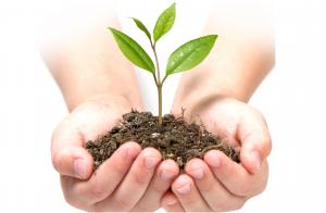 mani e pianta
